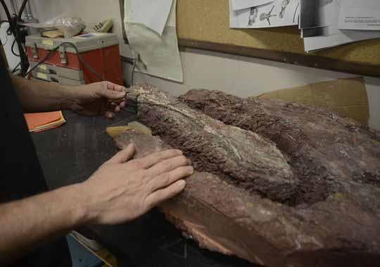 dinosaur-fossils-57461