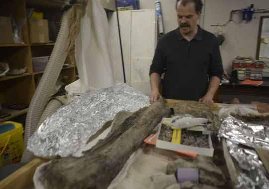 dinosaur-fossils-574619845463