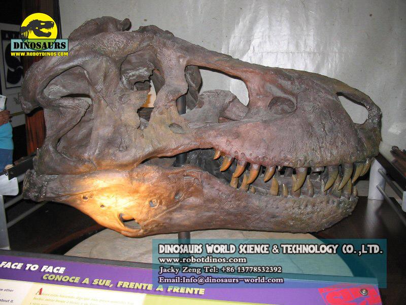 Dinosaur Fossil & Bones Replica - Zigong Dinosaurs World