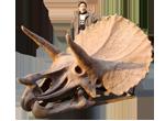 Dinosaur Fossil & Bones