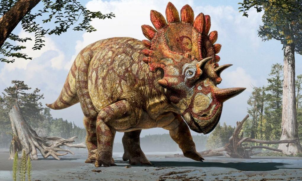 Nova vrsta dinosaura koja je bliska srodnica s triceratopsima (1)