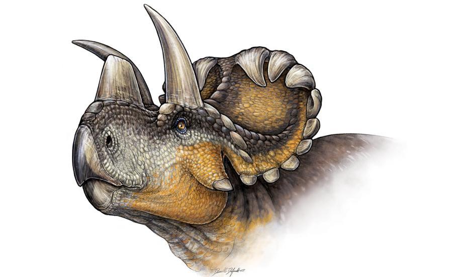 Nove vrste triceratopsa