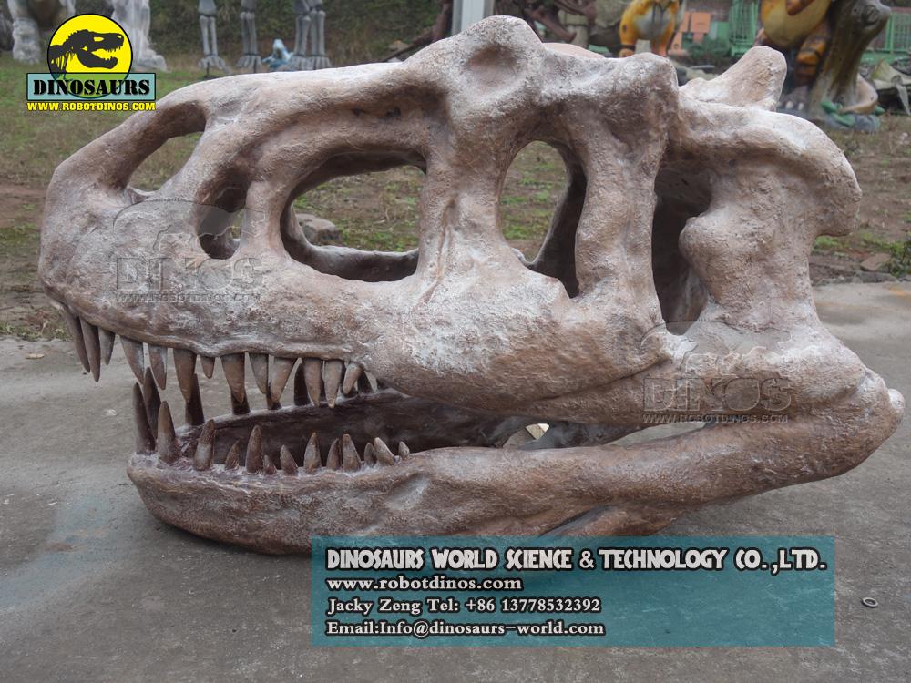 Dinosaur Allosaurus Skull Replica