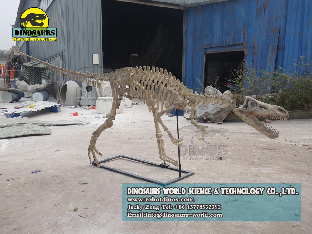 Velociraptor Skeleton, outdoor playground dinosaur exhibition