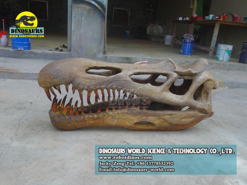 DWF3293 Dinosaur Succhomimus Skull Replica