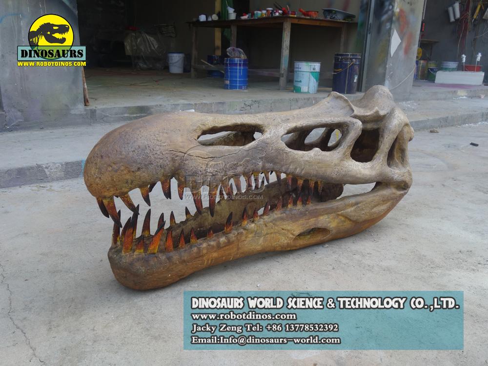 DWF3293 Dinosaur Succhomimus fossil Replica
